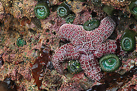 Starfish - Bandon, OR