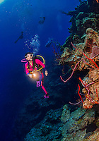 24 July 2015: SCUBA Diver Sally Herschorn explores the drop-off at Hammerhead Hill, on the North Shore of Grand Cayman Island. Located in the British West Indies in the Caribbean, the Cayman Islands are renowned for excellent scuba diving, snorkeling, beaches and banking.  Mandatory Credit: Ed Wolfstein Photo *** RAW (NEF) Image File Available ***