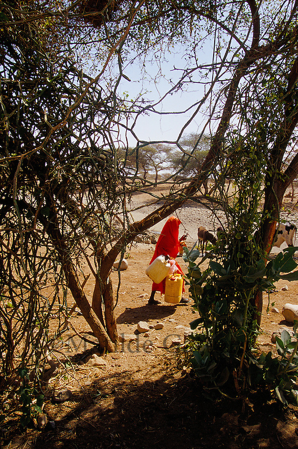 Eritrea - Gash Barka - Woman collecting water from the nearest well to her house, 3 hours walk. As a result of 30 years of war for independence against Ethiopia (from 1961 to 1991) and another 3 years from 1997 to 2000, there are 50,000 Eritreans currently living in internally displaced (IDP) camps throughout the country. These IDPs have fled three times in the last 10 years, each time because of renewed military conflict. They lived in relatives' homes when lucky enough, but mostly, the fled to the mountains, where they attempted to do what Eritreans do best, survive. Currently there is no Ethiopian occupation in Eritrea, but landmines prevent the IDPs from finally going home. .It is estimated that every Eritrean family lost two or three members to the war which makes the reality of the current emergency situation even more painful for Eritreans worldwide. Currently, the male population has been decreased dramatically, affecting the most fundamental socio-economic systems in the country. Among the refugee population, an overwhelming majority of families are female-headed, severely affecting agricultural production. For, IDPs in particular, 80% of households are female-headed..The unresolved border dispute with Ethiopia remains the most important drawback to Eritrea's socio-economic development, as national resources (human and material) continue to be prioritized for national defense. Eritrea is vulnerable to recurrent droughts and variable weather conditions with potentially negative effects on the 80 percent of the population that depend on agriculture and pastoralism as main sources of livelihood. The situation has been exacerbated by the unresolved border dispute, resulting in economic stagnation, lack of food security and increased susceptibility of the population to various ailments including communicable diseases and malnutrition. .