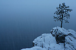 A young pine grows from a rock outcropping covered in snow on the shore of Lake Coeur D Alene during a snowfall