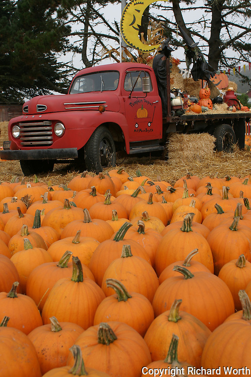 Orange and red:  pumpkins and an old truck all decked out to celebrate Halloween - Half Moon Bay, California.