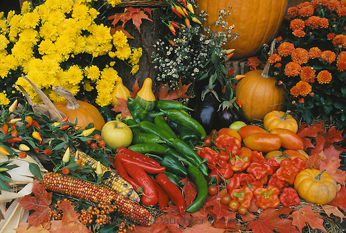 Harvest of peppers, pumpkin, and marigolds