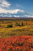 Autumn tundra and Denali, North America's tallest peak at approximately 20,237 ft. (6,168m),  Alaska.