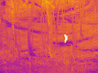 A Thermogram of a young child lost in the woods.  This image is part of a series.  The different colors represent different temperatures on the object. The lightest colors are the hottest temperatures, while the darker colors represent a cooler temperature.  Thermography uses special cameras that can detect light in the far-infrared range of the electromagnetic spectrum (900?14,000 nanometers or 0.9?14 µm) and creates an  image of the objects temperature..
