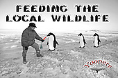 Feeding deer is for tourists. If you're lucky enough to see the rare Yooper penguins, try luring them with fresh carrots, their favorite snack.