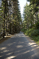 FOREST_LOCATION_90115