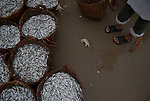 Fish for sale during the morning fish market on Mui Ne beach.