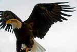 Eagle 5-29-14