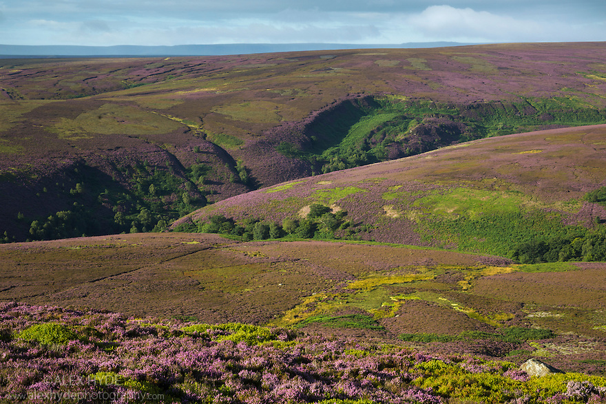 Looking towards Stainery Clough and Howden Moors. Peak District National Park, Derbyshire, UK. August.