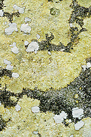 Lichen on rock, east Tennessee, 1993.