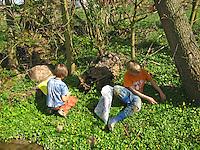 Jungen, Kinder ernten Scharbockskraut, Scharbocks-Kraut, Kräuter im Frühjahr sammeln für Kräutersuppe und Wildgemüse-Salat, Ranunculus ficaria