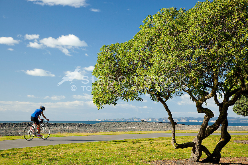 Cyclist & Ngaio tree on Napier foreshore.  Distant view of Cape Kidnappers.