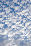 San Clemente Island, Channel Islands, California; puffy, white cloud formations against a polarized blue sky