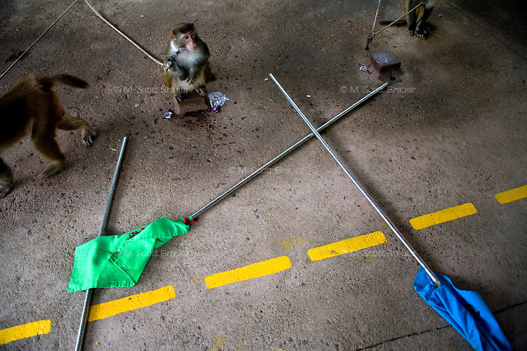 The &quot;monkey honor guard&quot; waits to begin a show for tourists at Monkey Island near Lingshui, Hainan, China.