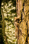 Squirrel clinging to the side of a tree