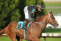 HOT SPRINGS, AR - MARCH 18: Love That Lute #9, ridden by Luis Contreras after crossing the finish line in the 6th race at Oaklawn Park on March 18, 2017 in Hot Springs, Arkansas. (Photo by Justin Manning/Eclipse Sportswire/Getty Images)