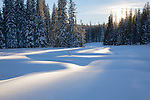 Deep snow covers a meadow in the forest on Lolo Pass on the Montana - Idaho border. Lolo National Forest in mid-winter.