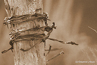 Don't fence me in......<br />