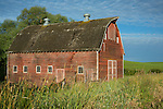Washington, Eastern, Palouse,  An old red barn in the rolling hills of the Palouse.