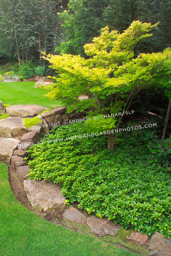 "Even the large stone stairs seem to ""spill"" from an upper lawn to a lower one, as water would spill between ponds, in this scene from the upper, walking garden in this otherwise small suburban backyard east of Seattle.  Imagine the boulders as pondside buttresses and the groundcover as solid ground in this Zen-like interpretation of a traditional Japanese rock garden. Design by Sander Groves landscapes, Inc."