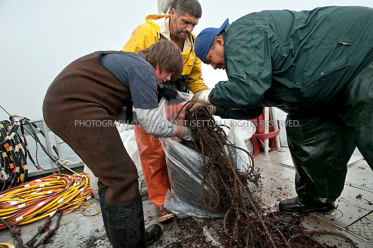 8/14/2009--Puget Sound, Seattle, WA, USA..Jeff Choke (right), a member of the Nisqually Indian tribe in Washington State, and director of marketing for Nisqually Aquatic Technologies, Steve Sigo (center) and his son Andy Sigo (left) put an old net just removed from the Sound into a plastic bag...Jeff Choke, a member of the Nisqually Indian tribe in Washington State, and director of marketing for Nisqually Aquatic Technologies, a  diving company, has been hired using federal stimulus dollars to remove old nets in Puget Sound that destroy habitat and kill fish and other marine animals. The Nisqually indians are one of many tribes whose fishing has been affected by the big commercial fishing nets that came to deplete fish populations and damage the Sound....©2009 Stuart Isett. All rights reserved.