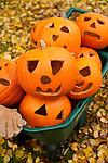 Halloween fun with pumpkins in a wheelbarrow