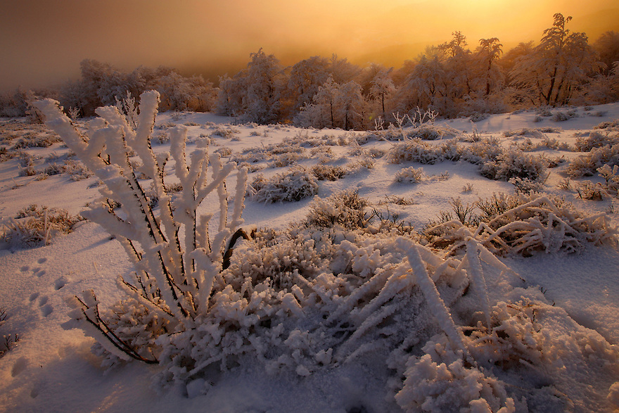 Winter at Rozsypaniec Peak, Bieszczady National Park, Poland