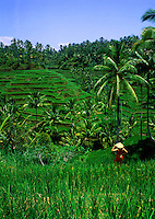 Lush, green Indonesian agricultural landscape of terraced rice fields; a worker in a straw hat in the foreground. Bali, Indonesia.