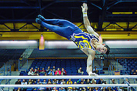 Cal Gymnastics M