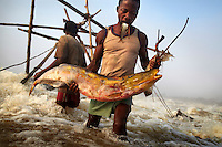 Fishermen remove a giant carp from one of their baskets, at Wagenia Falls (or Boyoma Falls), in the middle of the Congo River, DR Congo.