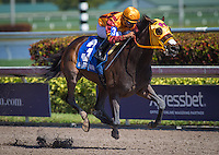 HALLANDALE, FL - JANUARY 28: Curlin's Approval #3, ridden by Luis Seaz win the Hurrican Bertie at Gulfstream Park on January 28, 2017 in Hallandale Beach, Florida. (Photo by Zoe Metz/Eclipse Sportswire/Getty Images)