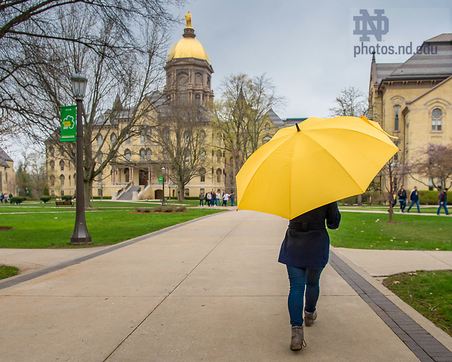 April 11, 2017; Student carries a yellow umbrella on Main Quad. (Photo by Matt Cashore/University of Notre Dame)