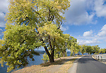 Idaho,Coeur d'Alene. Lakeshore trees and the Centennial Trail along Coeur d'Alene Lake Drive as summer turns to autumn.