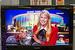 Wantagh, New York, USA. February 7, 2016. Host BETH STERN is holding tabby cat ALEXANDER, the Mayor of Last Hope Rescue, to tell the audience he is available for adoption, during Hallmark Channel Kitten Bowl III. Last Hope Animal Rescue has an Open House where the adoption center's volunteers and visitors watch the game on TV and cheer on their team, the Last Hope Lions. Over 100 adoptable kittens from Last Hope Inc and North Shore Animal League America participated in the taped games, and the Home and Family Felines won the 2016 championship, which first aired the day of Super Bowl 50.
