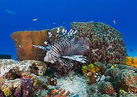 Caribbean coral reef photos