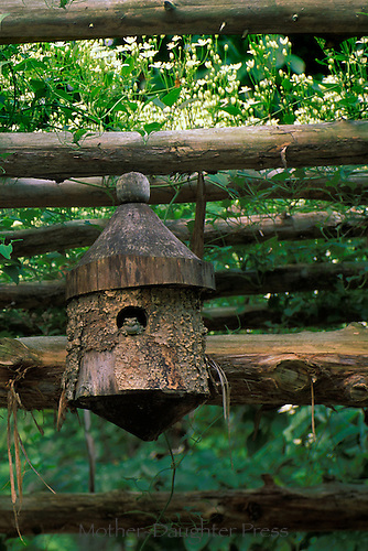 Frog in wooden birdbox