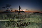 Shallow corals split level with a Papuan fisherman standing on his dugout canoe