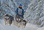 Dog Sled Race 2012