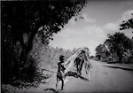 Death Throes of a Great Rainforest - Young Bugi boy leads horse burdened with firewood out of the forest, Sulawesi, Indonesia...Death Throes of a Great Rainforest - Young Bugi boy leads horse burdened with firewood out of the forest, Sulawesi, Indonesia.  Gathering wood for fuel is important at new, settlements in regions recently opened up by logging.