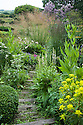 Sleeper-and-stone steps, hillside garden, Fairlight End, Pett, East Sussex, late June.