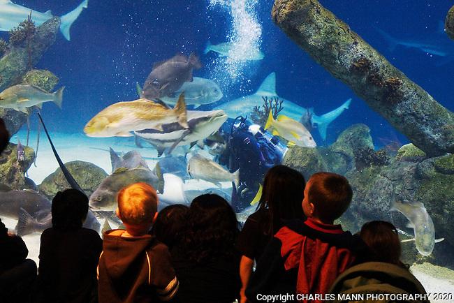 Albuquerque Bio Park Aquarium.Albuquerque, NM