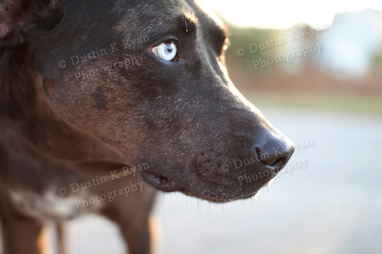 Dogs Black And White Photography Black Dog With White Eyes