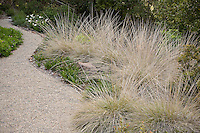 Muhlenbergia rigens, Deer Grass edging gravel patio in drought tolerant California native plant garden
