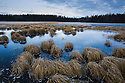 Canada,Yukon; Grass in frozen lake, late fall, dawn