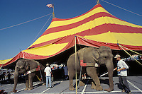 Clyde Beatty Cole Brothers Bros. Circus largest 3 three ring traveling mud show under canvas America United States