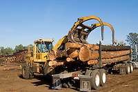 Logging a forest in Oroville, California.
