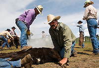 NEWS&GUIDE PHOTO / PRICE CHAMBERS.Carlton Loewer holds down a Little Jennie Ranch calf as Sam Coutts marks it with the ranch brand. The annual activity draws helping hands from around the region. About 300 young cattle now bear the mark resembling a half-moon over the letters GT.