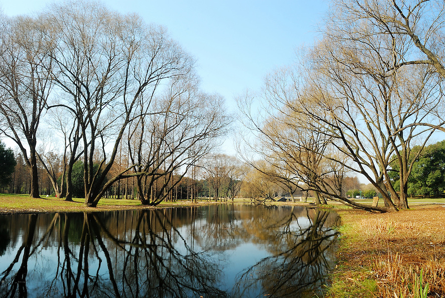 An autumn scene of trees and grass reflected on still ...