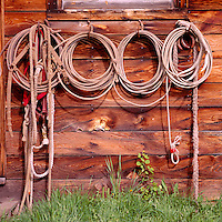Cowboy Lassos and Ropes hanging in a Row on Side Wall of Old Weathered Wood Cabin / Ranch Building