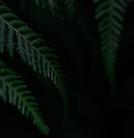 Plant History Glasshouse (formerly the Australian Glasshouse),1830s, Charles Rohault de Fleury, Jardin des Plantes, Museum National d'Histoire Naturelle, Paris, France. Detail of cyatheales showing the leaves against a dark background.